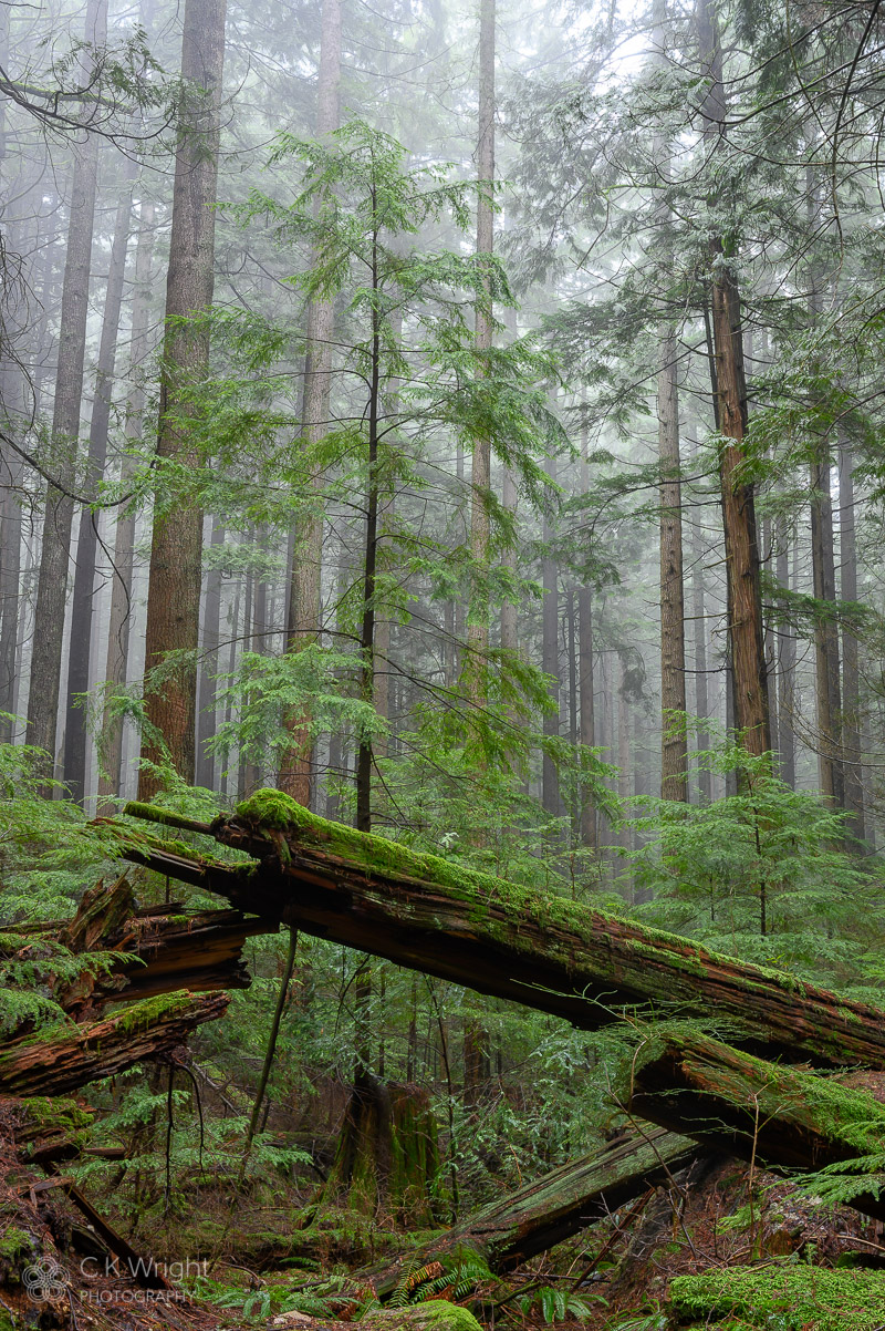 Rising Forest Lower Mount Seymour I