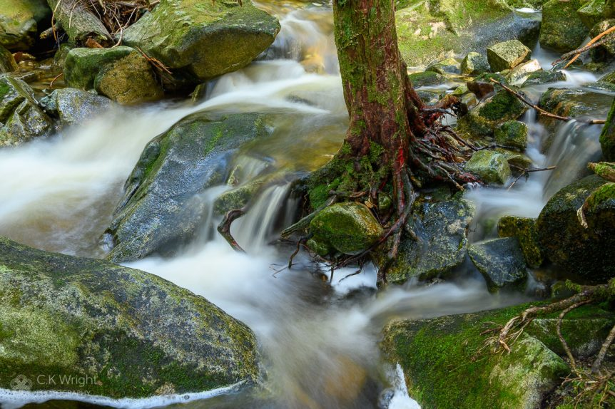 Roots Holding Rock, Noons Creek