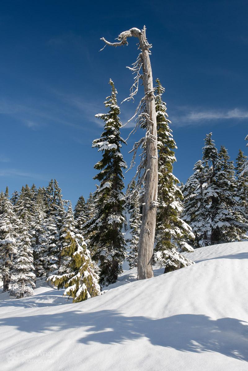 Winter Snag, Cypress Provincial Park