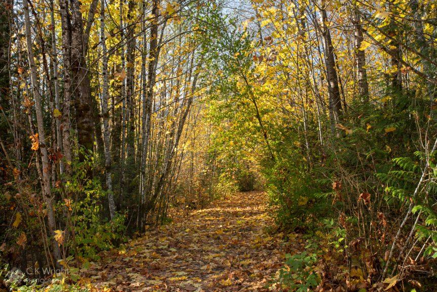 Fall along Trail at Mamquam River